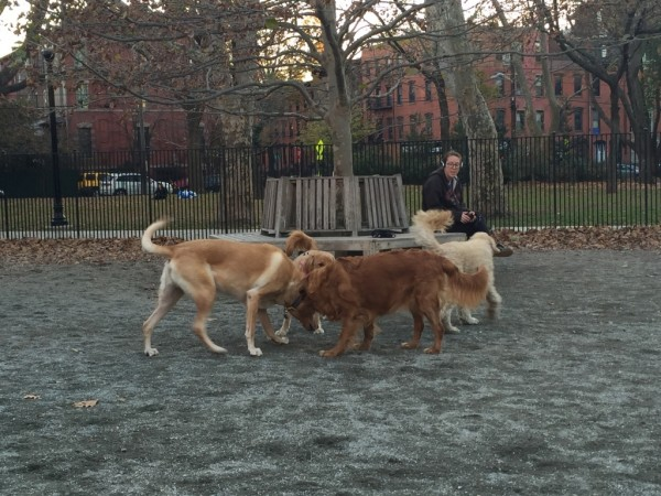 Pup Park Spotlight: Hamilton Park