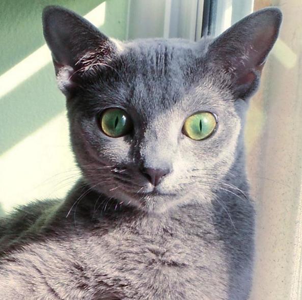 Pet Profile: Sasha the Blue