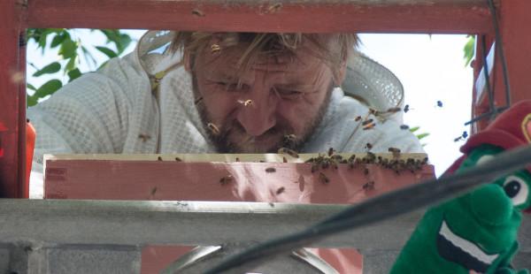bees ladder