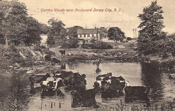 Curries Woods