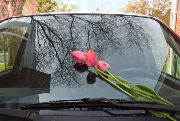 54ebafa1c8739_-_flowers-windshield-xl