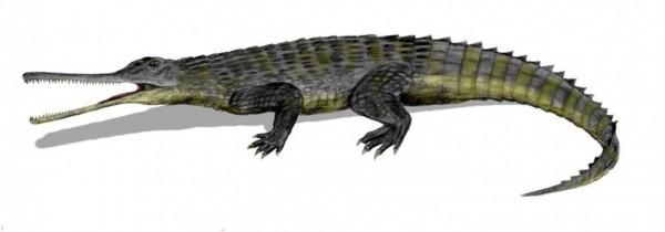 phytosaur_pic