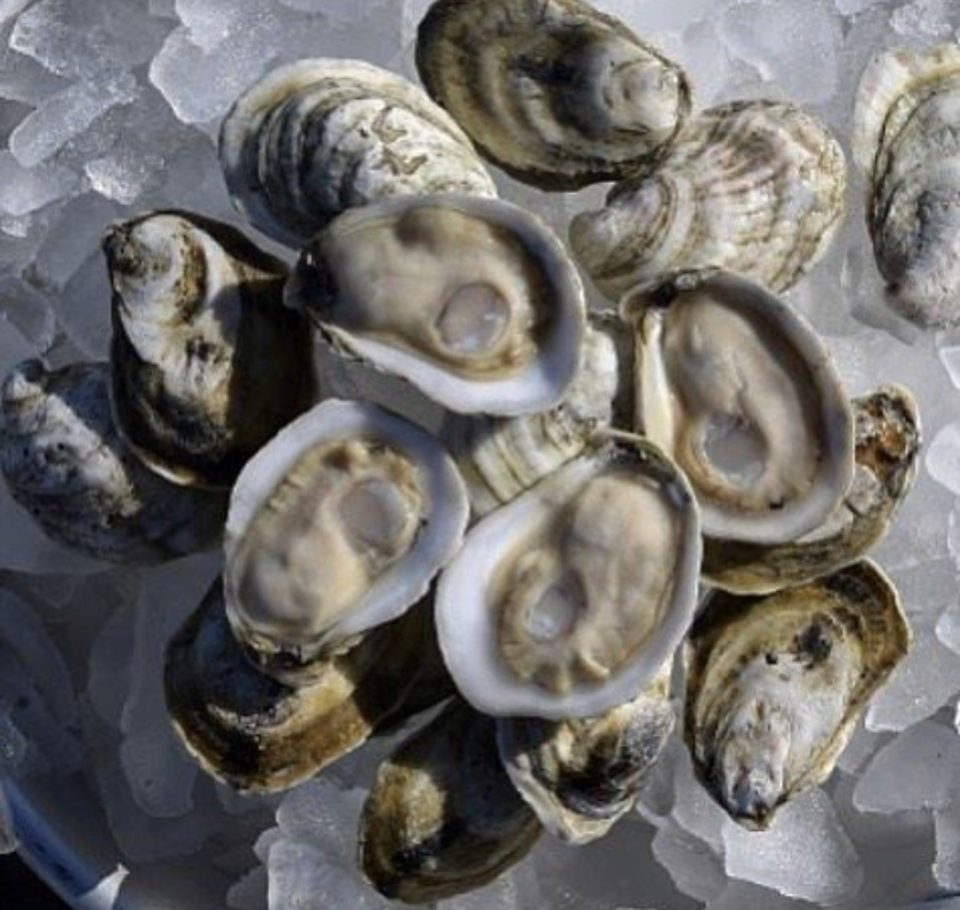 Image result for sexy oysters