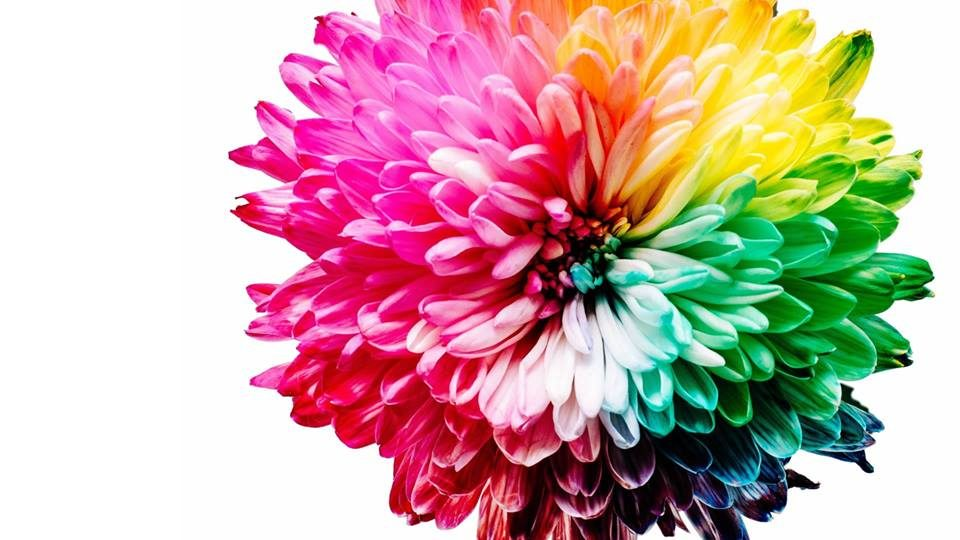 Bloom In Full Color: A Fundraiser Supporting Women of Color