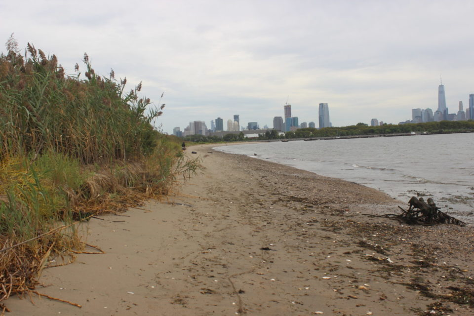 Exploring The Estuary – A look at what's really in the Hudson River