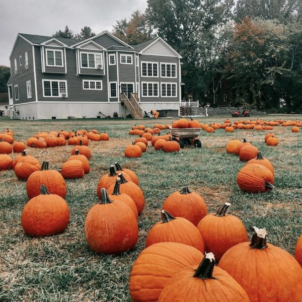 Pumpkin patches + corn mazes to visit in New Jersey